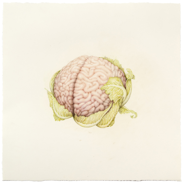 """Untitled (Cauliflower Brain)"" colored pencil on paper, 15.25"" x 15.25"", 2013"
