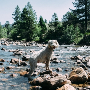 off leash dog training Denver