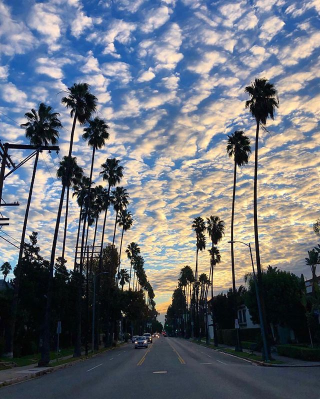 #LA ❤️ - - - #regram @calistreetshots  #maxlainerla #losangeles #palmtrees  #cali #california #lookingup #love #happy #LAsky #happyplace #loveLA