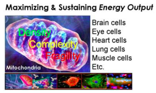 The powerhouse of energy creation in every cell: Mitochondria