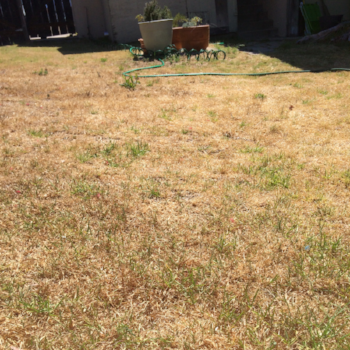 Dry_backyard_San Diego