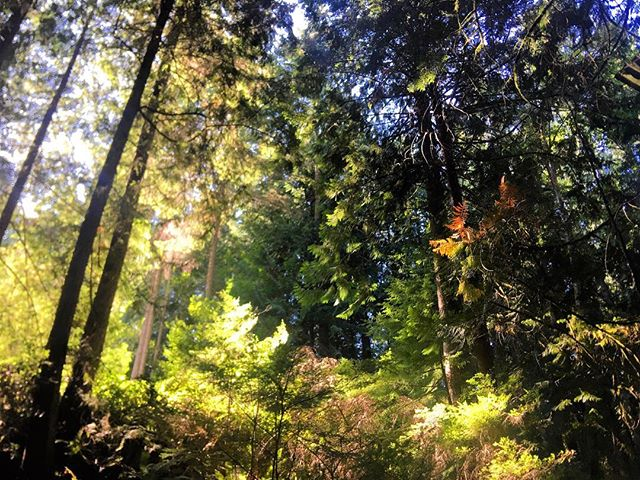 So grateful for this beautiful place I am so fortunate to call home. The Pacific Northwest is pure magic. I am thrilled and inspired by her beauty and abundance. I was foraging here yesterday for ferns and salal, it was the highlight of my day ✨✨✨ #pnw #local #forage
