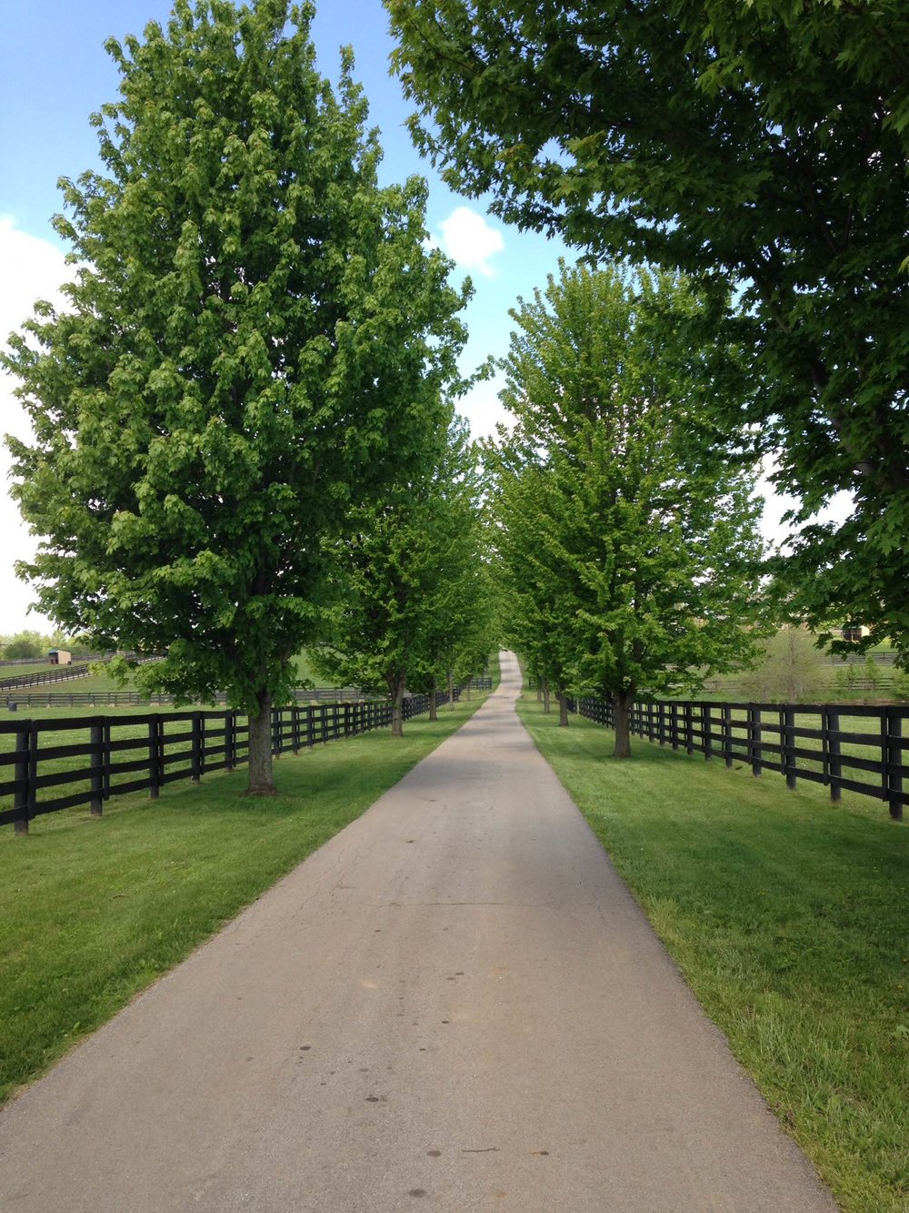 Main path through Old Friends Farm during the springtime