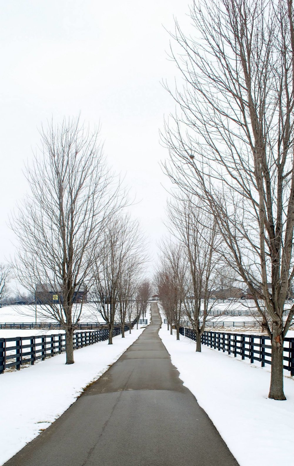 Main path through Old Friends Farm in the winter