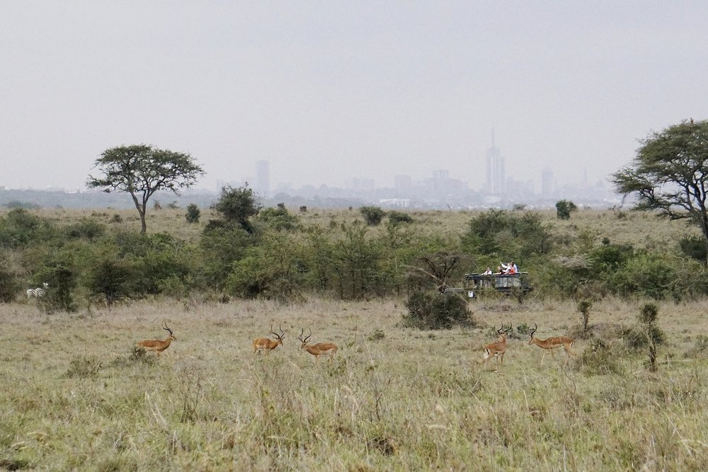 Driving through Nairobi National Park. I love the juxtaposition of the animals with downtown Nairobi in the distance.