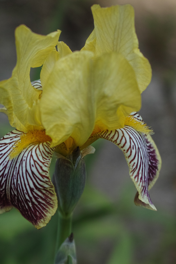 Iris zoomed in - still perfectly sharp