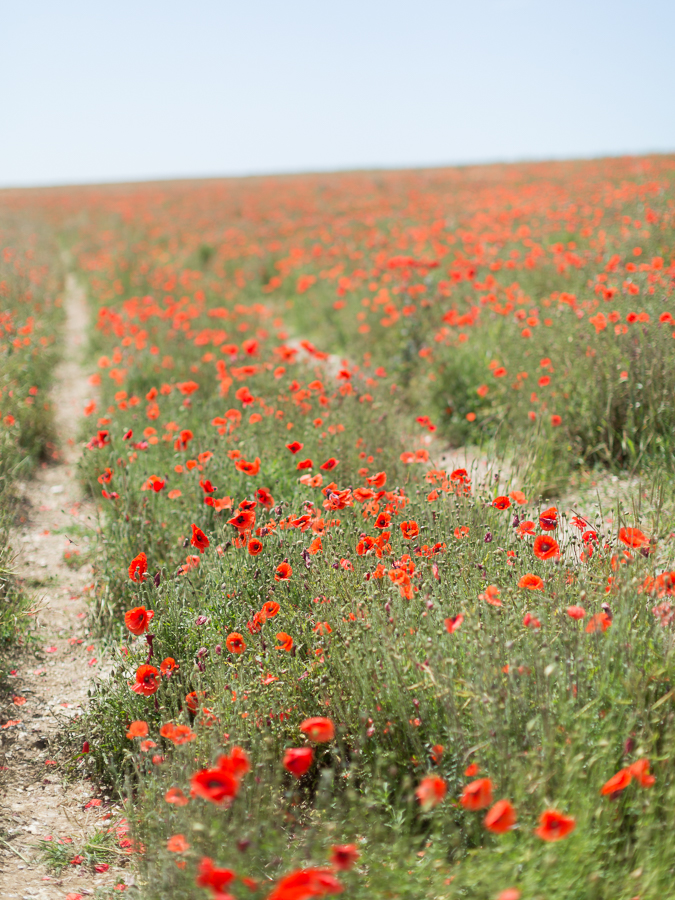 Chikae Okishima Howland_Ditchling Beacon_Poppy Fields_National Trust
