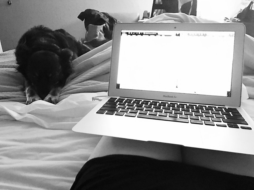 Chelsia's pup, Otto, lays by her side at a hotel in Malone, N.Y. as she works on writing Wild Escape.  (Chelsia Rose Marcius/March 25, 2017)