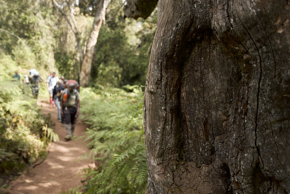 Day 2 / Afromontane Forest