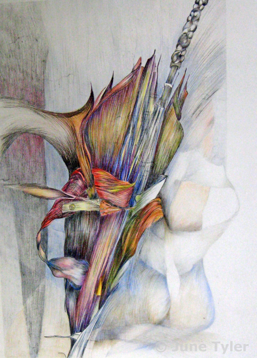 """""""Connected"""" 24"""" x 17"""" Lithograph - hand-colored with prismacolor pencils"""