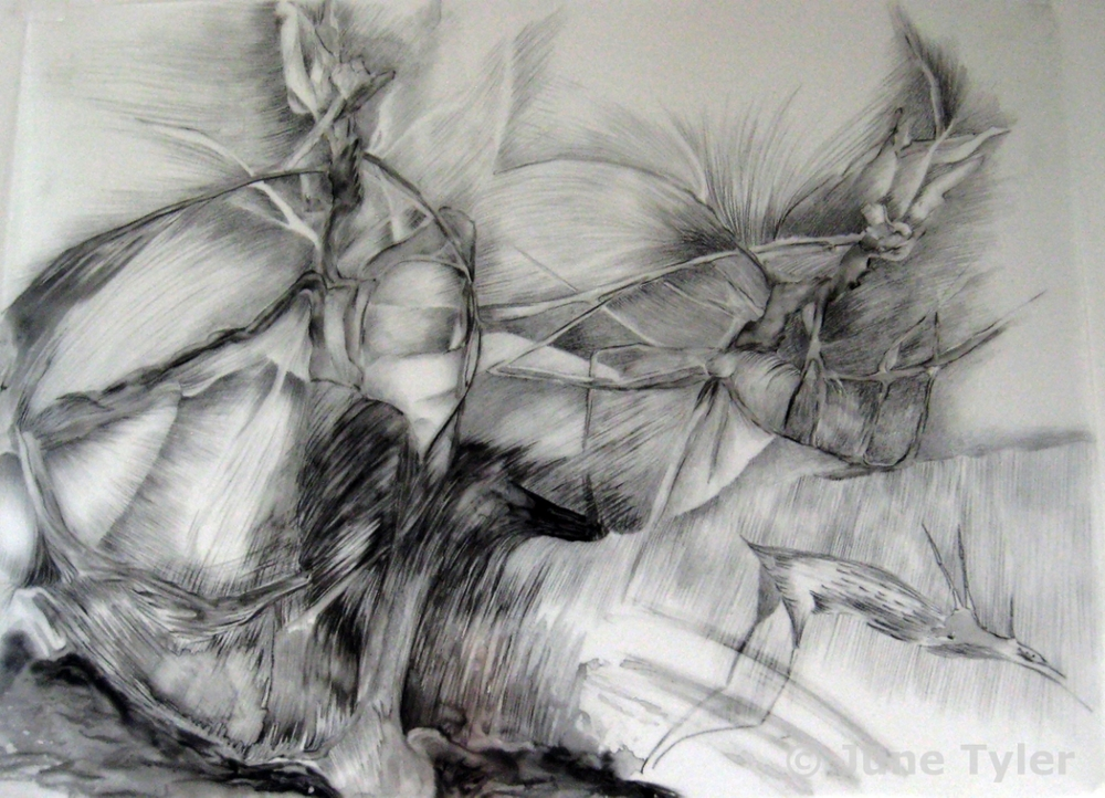 """Adrift"" 30"" x 22"" Drawing on lexan"