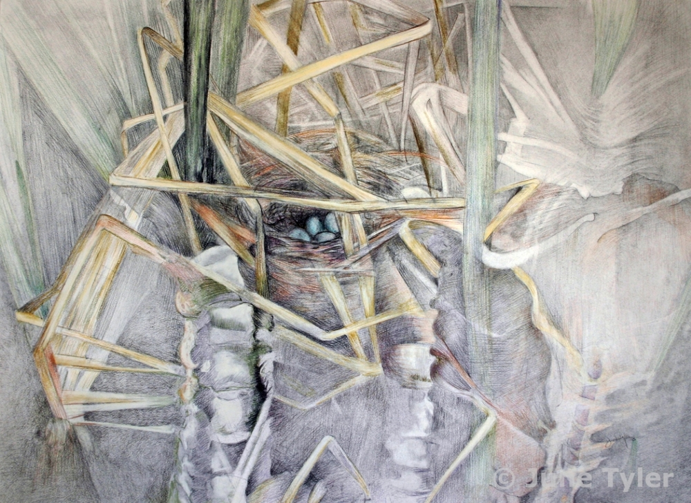 """Nest of Grasses and Bones"" 2005 22"" x 30"" Graphite and Prismacolor pencil drawing"