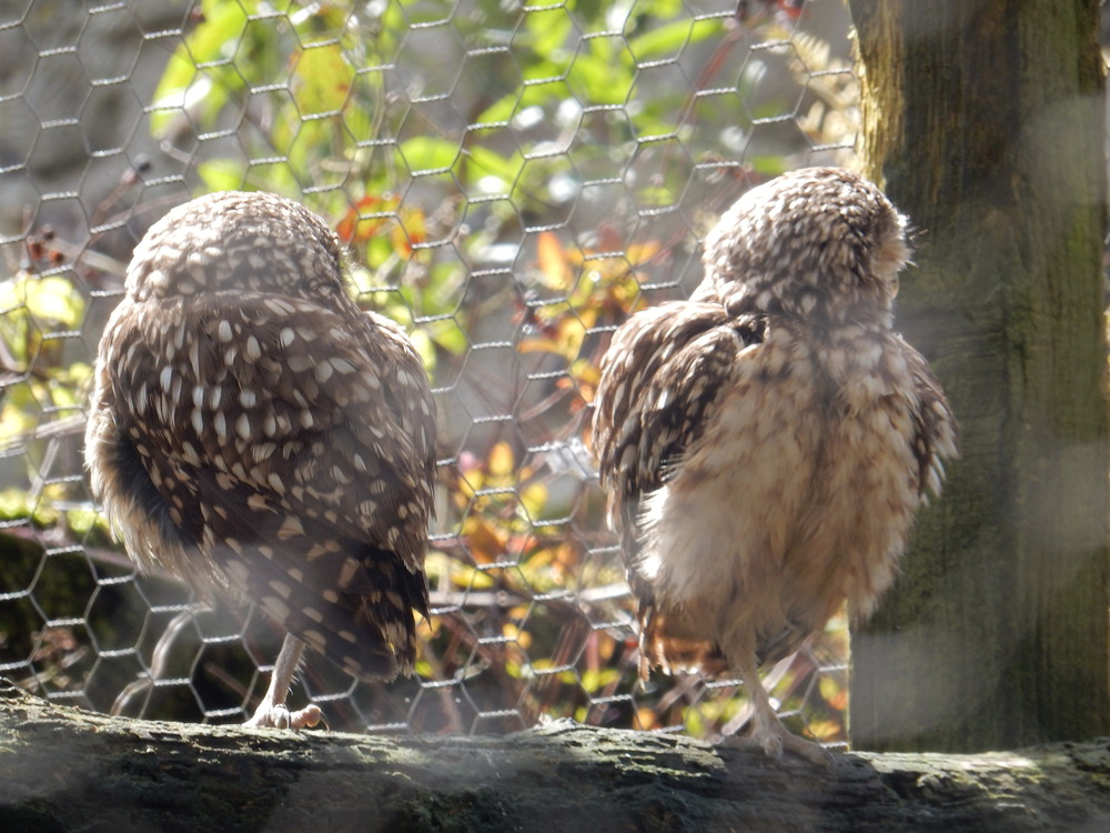 amateur photography birds owls