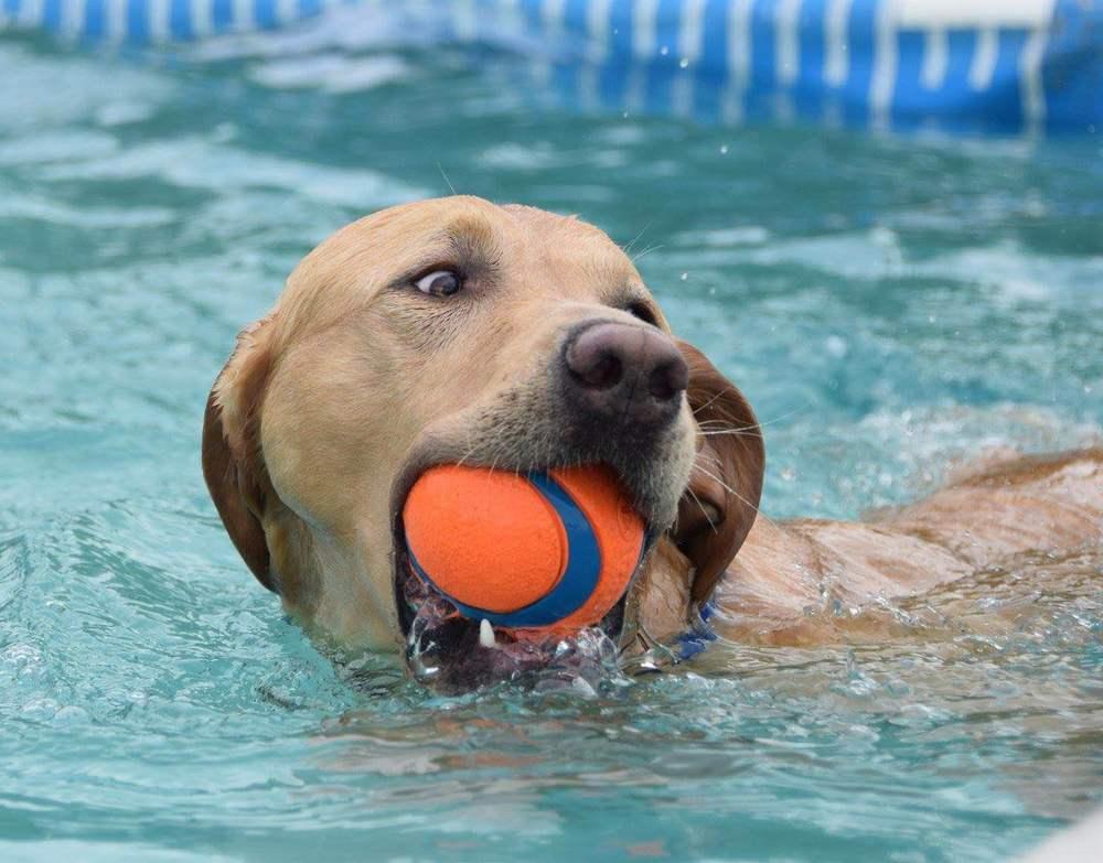We swim!