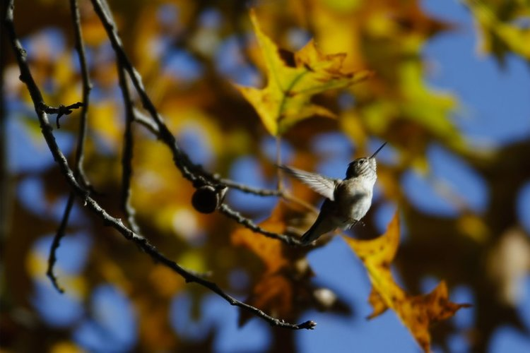 The brief appearance of an avian celebrity -