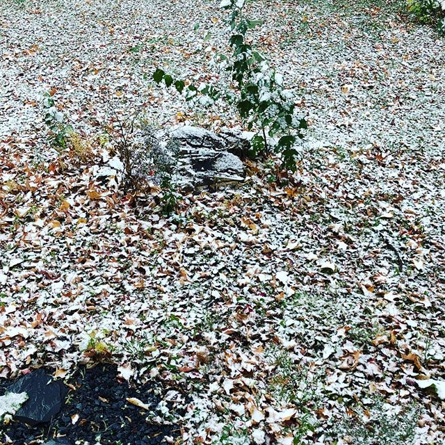 Yes, that is SNOW ❄️ in my back yard, on top of the fall leaves. 🍁 #snowfromoctobertomay 😳#whatwasithinkingmovingtomaine 😳#its85inscottsdale 😫 #sevenmoremonthsofthis 😫
