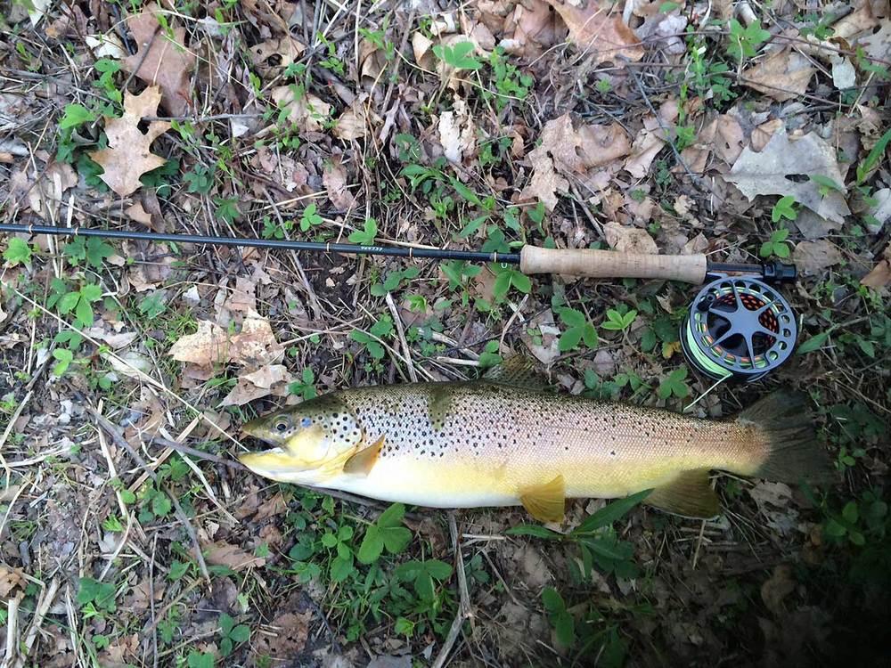 Josh's West Branch wild brown trout.