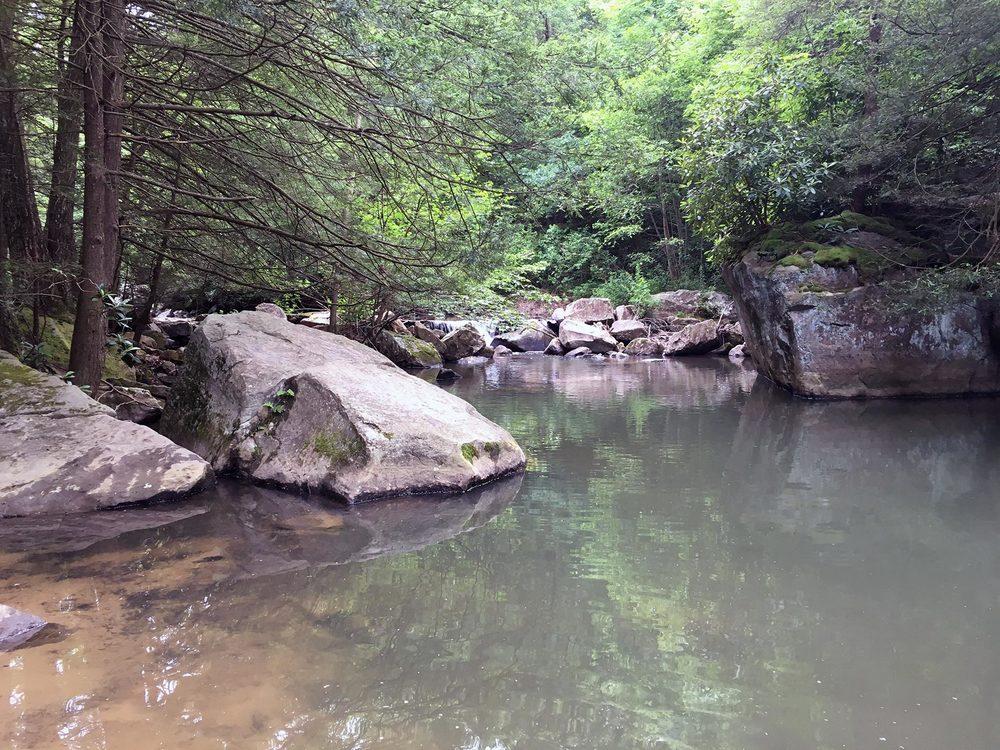 An upstream view of Beaver Creek.