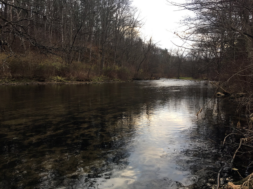 The gin clear water on Spring Creek near Shiloh Road.