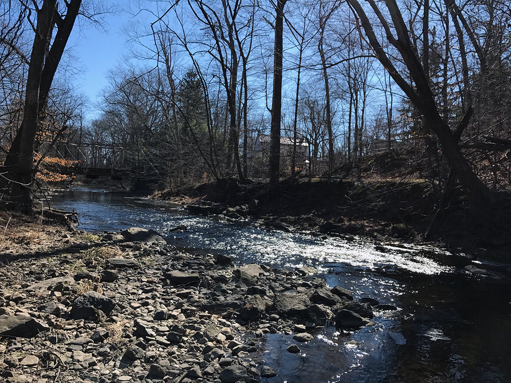 The low water on French Creek above Sheeder Mill Bridge.