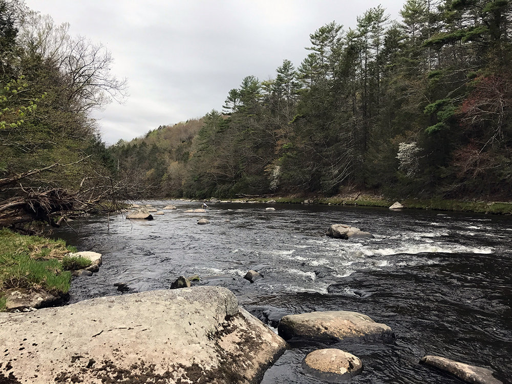 Looking downriver in the Neversink River Gorge.