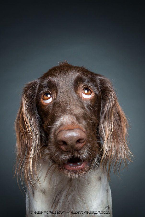 Shy Dog (Elke Vogelsang)