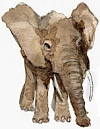 ELEPHANT (JPEG).jpeg