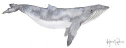 Whale jpeg.jpg