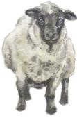 Sheep jpeg.jpg
