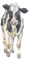 Cow jpeg.jpg