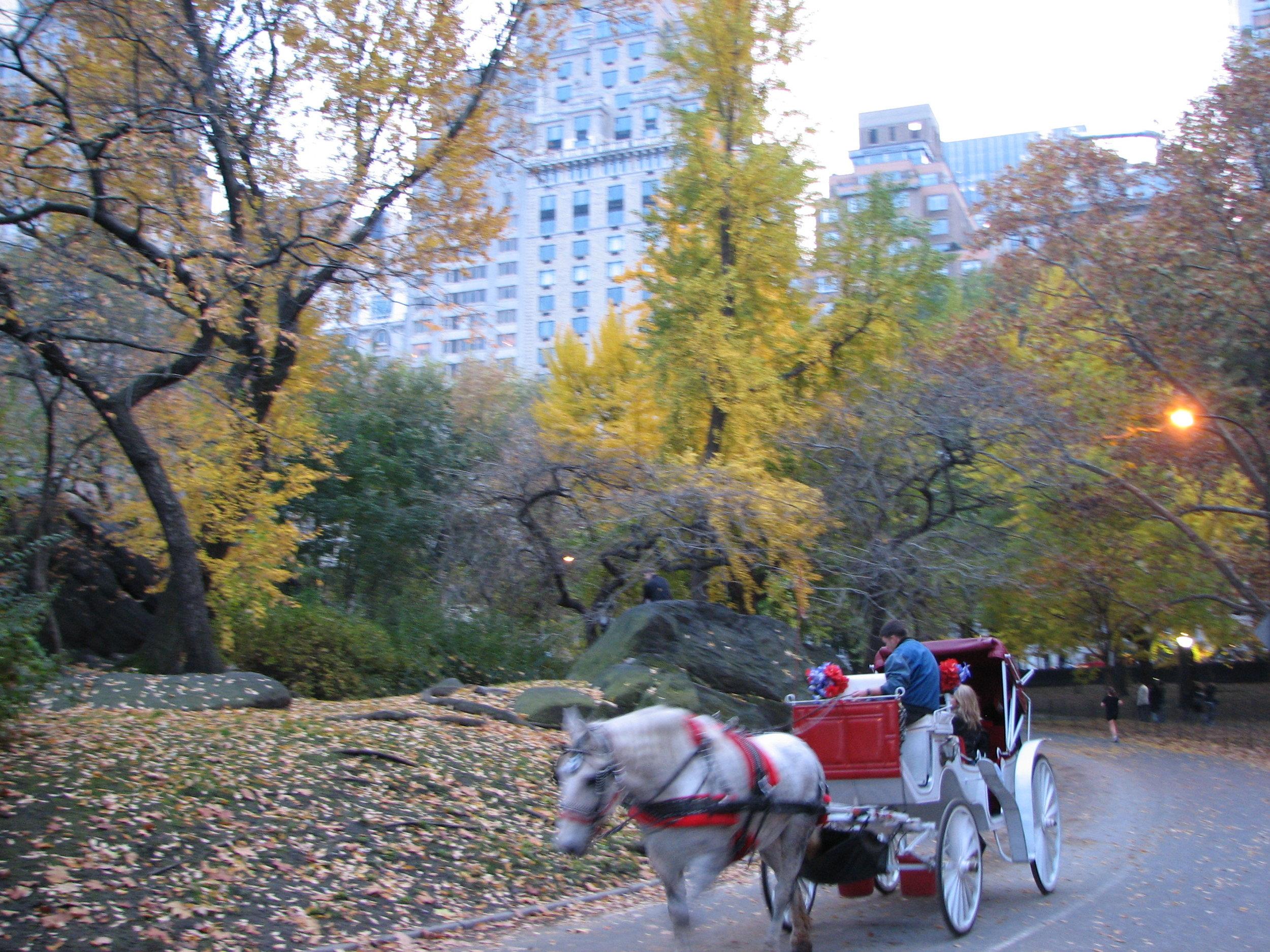 New York City November 06 086