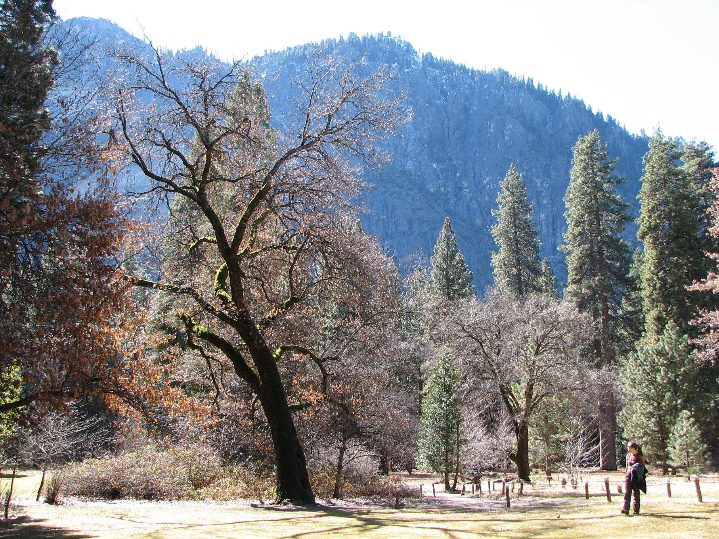 Yosemite_Feb 2007 111
