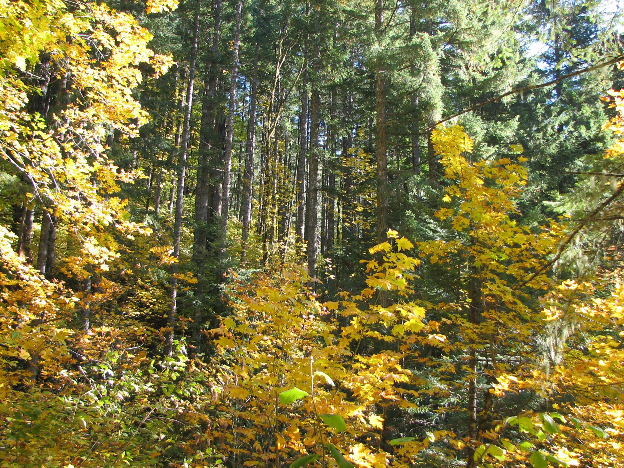 Oct & Nov 2008 107