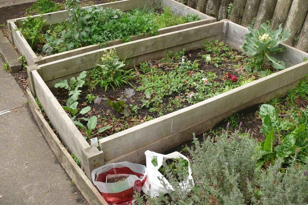 Organic gardens at Ponsonby Intermediate