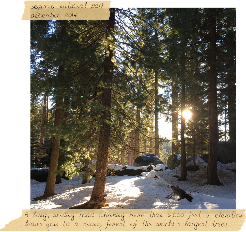 sequoia_national_park.png