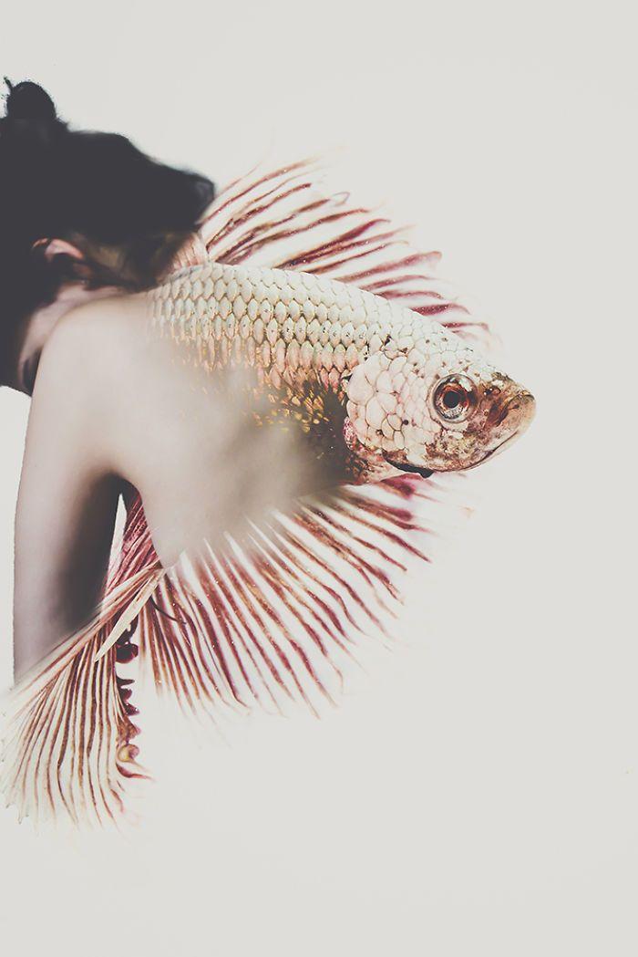 angelfishgirl.jpg