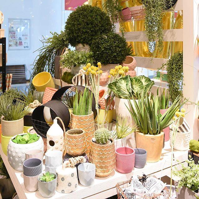 Have you seen what's blooming in store lately?  #plants #indoorplants #garden #homewares #stoneandgrain #interiordesign #oceangrove