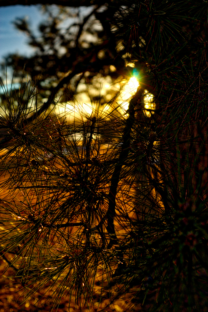 Sunset tree Denver_edit.jpg