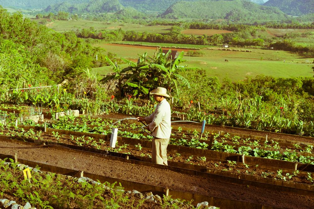 Farmer working at Finca Agroecologica El Paraiso, Vinales Cuba