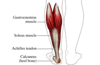 Illustration source: http://www.tri-physiotherapy.com