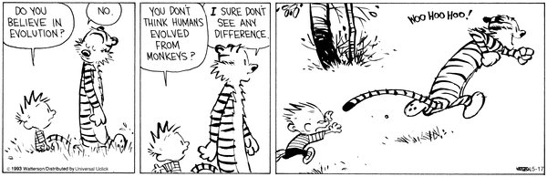 Calvin Evolution