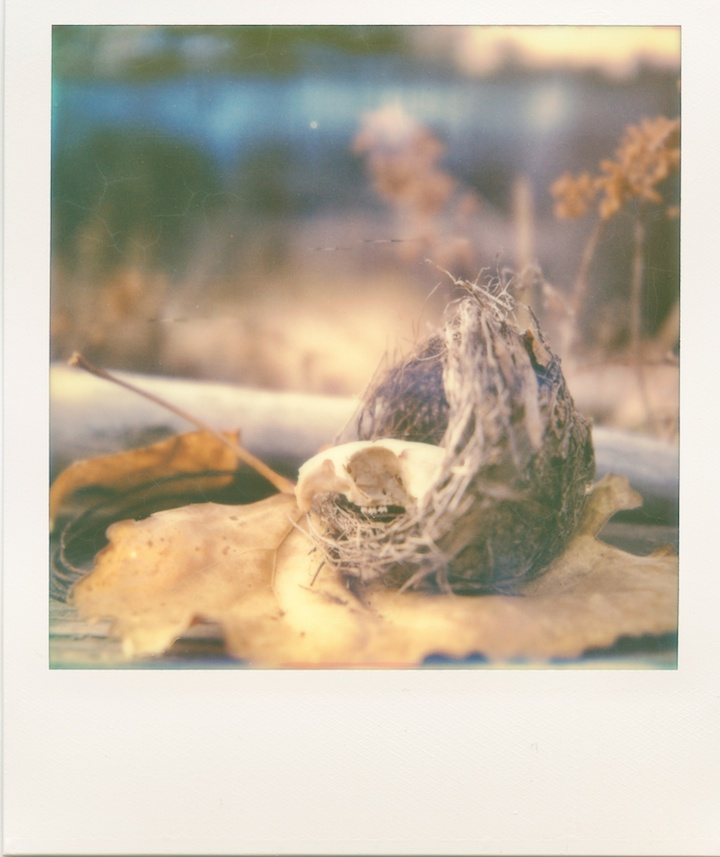 skull nest leaf polaroid