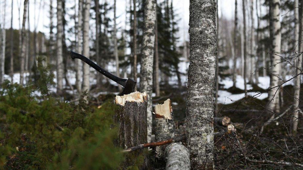Treeing Chopping_01.jpg
