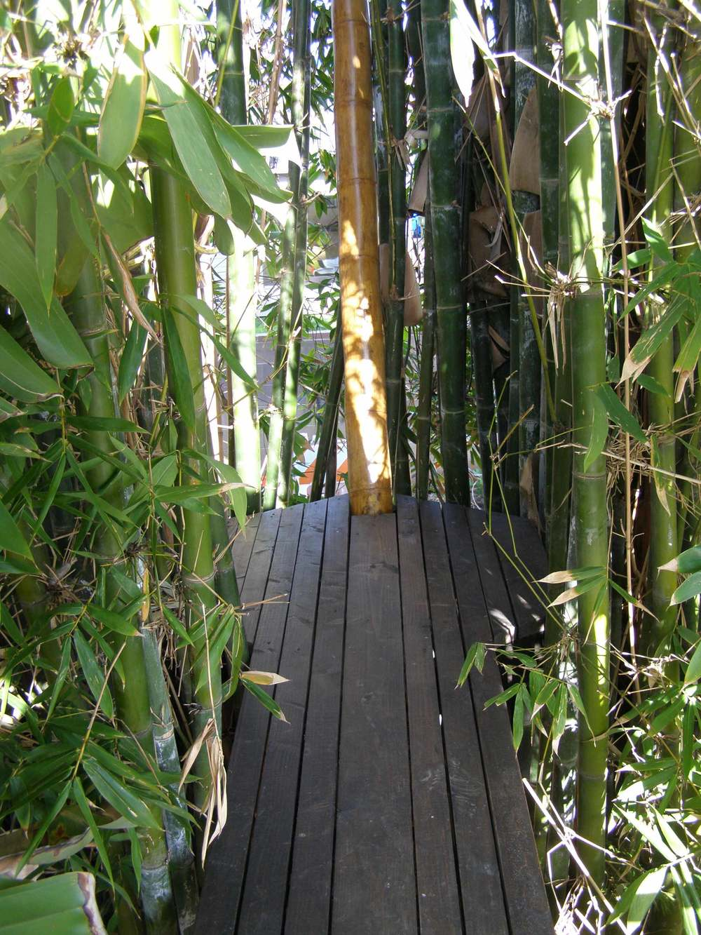 BambooPlay-CatWalk.jpg