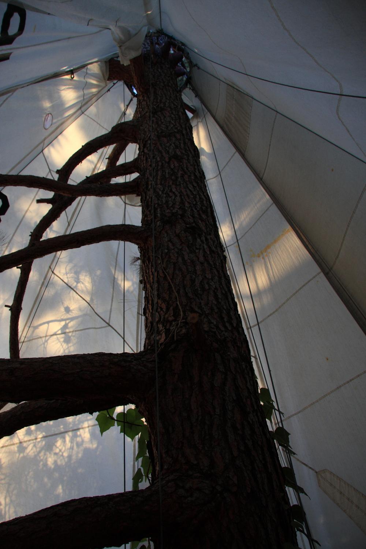 TreePi-InteriorTop.JPG