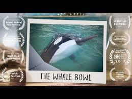 whalebowl2.jpg