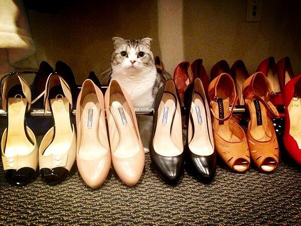 When-Meredith-got-hang-out-shoe-collection-costs-more-than-your-yearly-rent.jpg