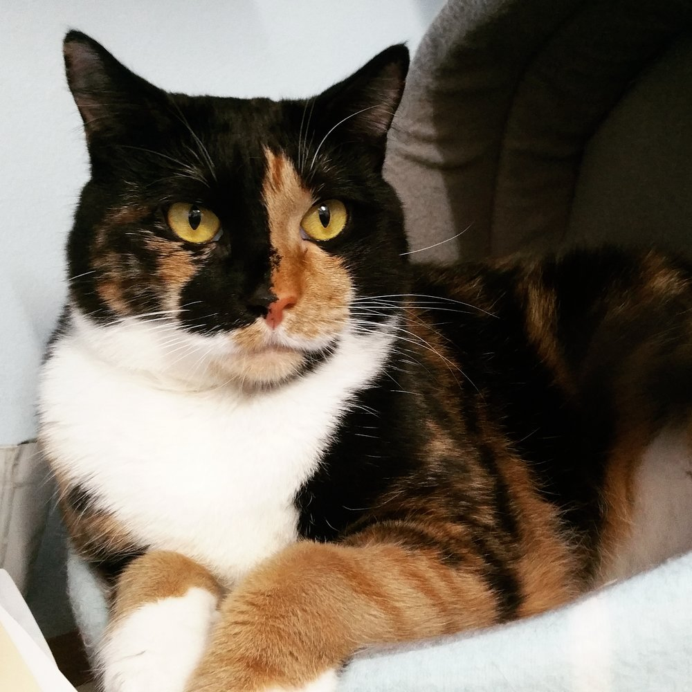 photo OF BUTTERNUT ALSO KNOWN AS 'THE BOSS' at collaroy plateau vets. lol