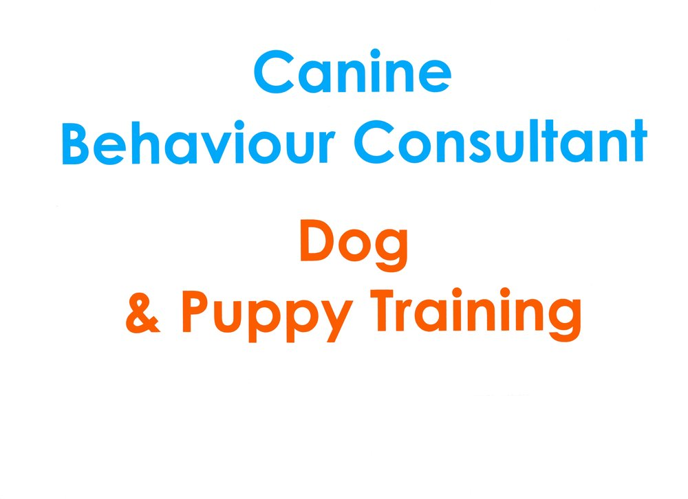 Canine Behaviour 2224.jpg