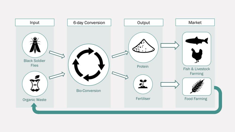 Entocycle-Circular-Process.jpg